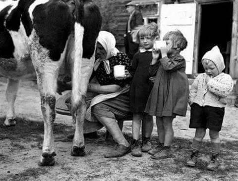 ganadería mundo rural (vacas)